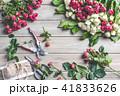 バラ 小枝 枝の写真 41833626