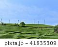 茶畑 茶園 新緑の写真 41835309