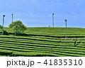 茶畑 茶園 新緑の写真 41835310