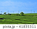 茶畑 茶園 新緑の写真 41835311