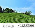 茶畑 茶園 新緑の写真 41835399