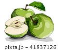 りんご リンゴ 林檎のイラスト 41837126