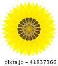 ひまわりの花 41837366