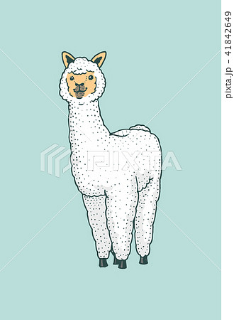 Cute Alpaca Llamas or wild guanaco on the background of Funny smiling animals in Peru for card 41842649