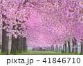 桜並木 41846710