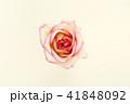 お花 フラワー 花の写真 41848092