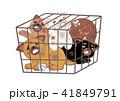 動物 檻 わんこのイラスト 41849791