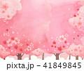 さくら サクラ 桜のイラスト 41849845