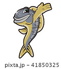 サカナ 魚 魚類のイラスト 41850325