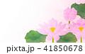 蓮 仏 花 背景  41850678