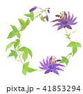 トケイソウ 花 植物のイラスト 41853294