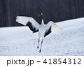 鶴 鳥 タンチョウの写真 41854312
