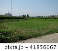 のどかな田園風景 41856067