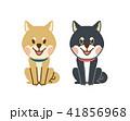 柴犬 41856968