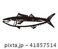 さわら 水墨画 鰆のイラスト 41857514