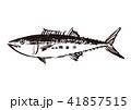 さわら 水墨画 鰆のイラスト 41857515