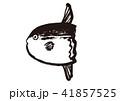 マンボウ 水彩画 41857525