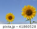 夏イメージ ひまわり 向日葵 41860528