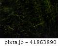 ホタル ゲンジボタル 光跡の写真 41863890
