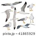 ベクター 鳥 カモメのイラスト 41865929