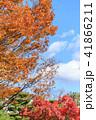 紅葉 もみじ 秋の写真 41866211