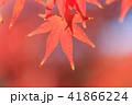 紅葉 もみじ 秋の写真 41866224