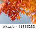 紅葉 もみじ 秋の写真 41866233