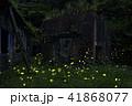 昆虫 虫 蟲の写真 41868077