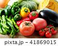 夏野菜 41869015