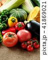 夏野菜 41869021