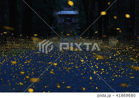 内尾神社のヒメボタル 41869680