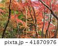 紅葉 秋 楓の写真 41870976