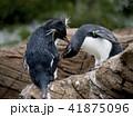 ペンギン 41875096