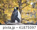 ペンギン 41875097