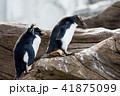 ペンギン 41875099
