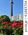 バラ 花 晴れの写真 41883704