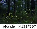 昆虫 虫 蟲の写真 41887997
