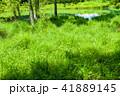 御射鹿池 池 新緑の写真 41889145