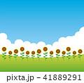 向日葵畑 ひまわり 向日葵のイラスト 41889291