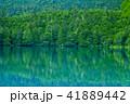 御射鹿池 池 新緑の写真 41889442