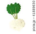 白バック カブ 野菜のイラスト 41889630