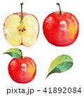りんご 林檎 水彩画のイラスト 41892084