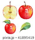 りんご|水彩画(ベクターイラスト) 41895419