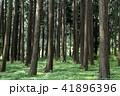 木 森 緑の写真 41896396