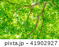 新緑イメージ 41902927