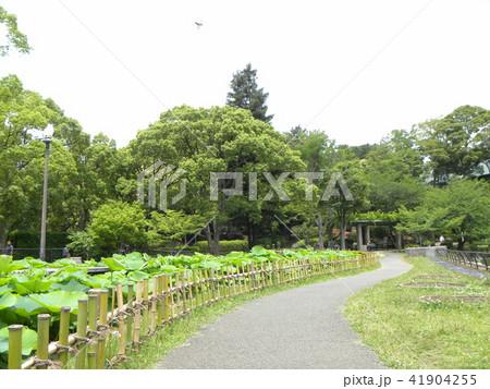 千葉公園オオガハス池の散策路 41904255