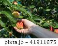 りんご アップル リンゴの写真 41911675
