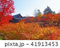 東福寺 紅葉 通天橋の写真 41913453