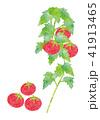 トマト 野菜 夏野菜のイラスト 41913465