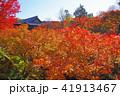 東福寺 紅葉 通天橋の写真 41913467